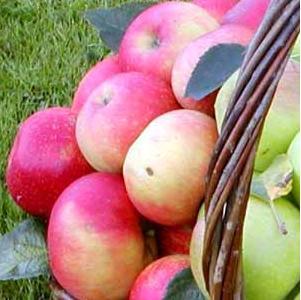 Æbler i kurv